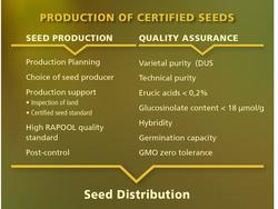Production of certified seeds